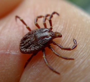 Environmentally friendly Tick and Parasite control